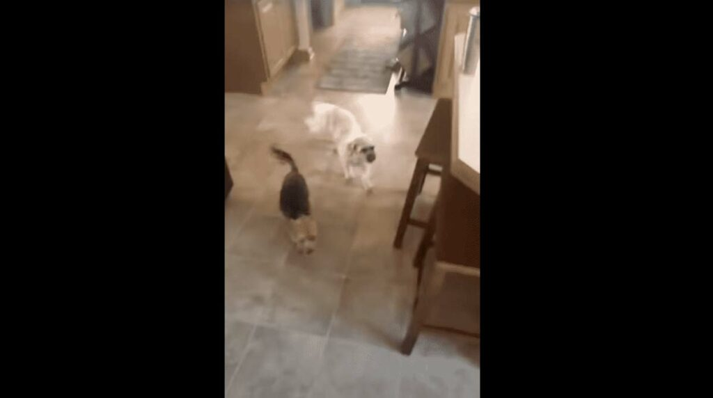 Unexpected dog comes over for a playdate