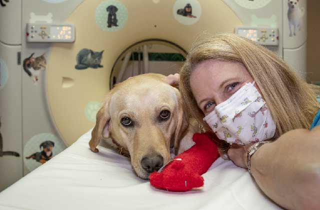 Brea the Golden Retriever helps out at the hospital