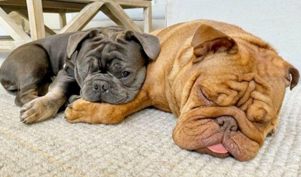 nfl star loves his bulldogs